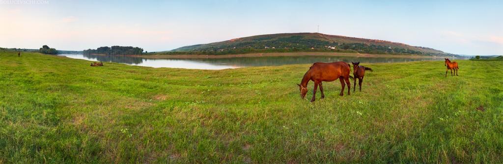 nistru river riu moldova fotografie фотограф фотографии днестр река берег реки отдых туризм путешествие спорт лошадь