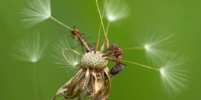 муравьи, макро