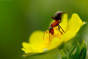 ant_and_a_flower